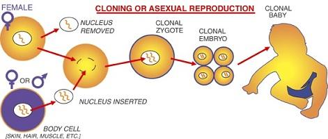 kloning2b